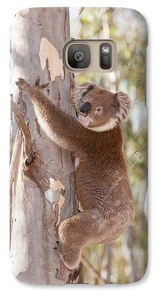 Koala Bear Galaxy S7 Case by Ashley Cooper