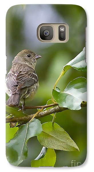 Lazuli Bunting Female 2 Galaxy S7 Case by Sharon Talson