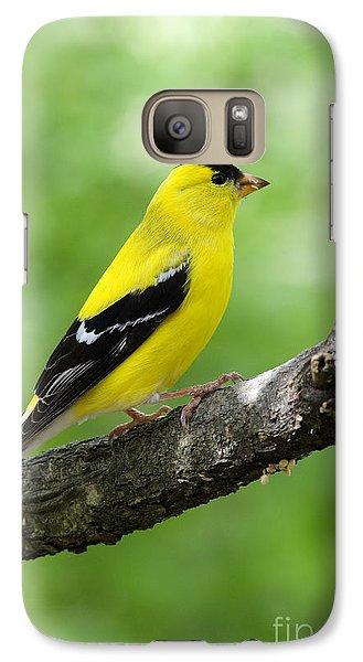 Male American Goldfinch Galaxy Case by Thomas R Fletcher