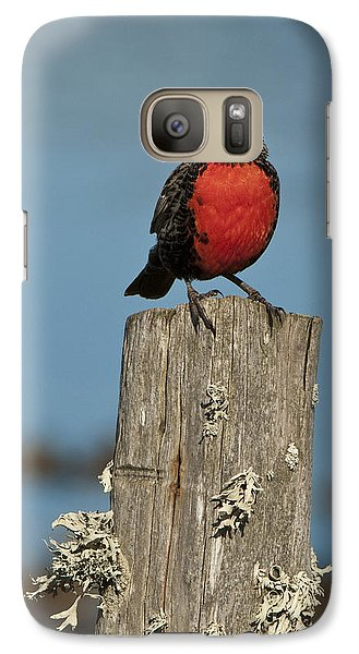 Male Long-tailed Meadowlark On Fencepost Galaxy Case by John Shaw