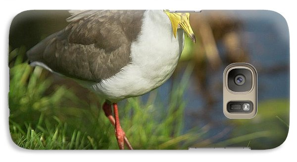 Masked Lapwing Galaxy S7 Case by Bob Gibbons