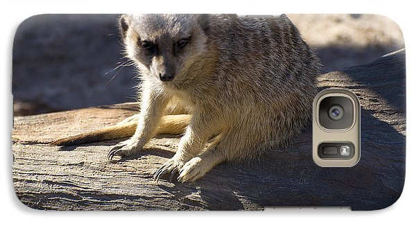 Meerkat Resting On A Rock Galaxy S7 Case by Chris Flees