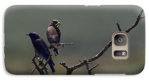 Mountain Bluebird Pair Galaxy Case by Mike  Dawson