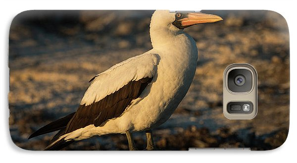 Nazca Booby (sula Granti Galaxy S7 Case by Pete Oxford