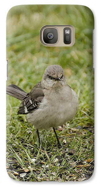 Northern Mockingbird Galaxy S7 Case by Heather Applegate
