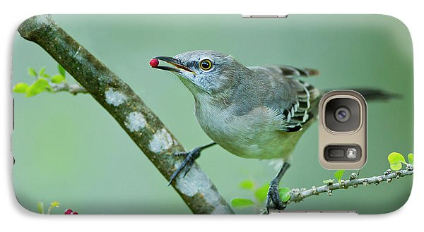 Northern Mockingbird (mimus Polyglottos Galaxy S7 Case by Larry Ditto