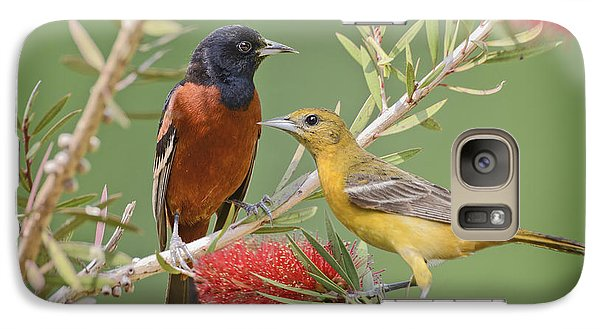 Orchard Oriole Pair Galaxy Case by Bonnie Barry