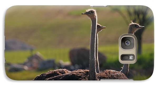 Ostriches Galaxy Case by Dan Sproul
