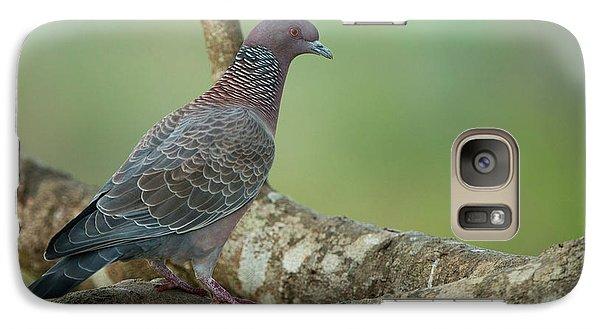 Picazuro Pigeon (patagioenas Picazuro Galaxy Case by Pete Oxford