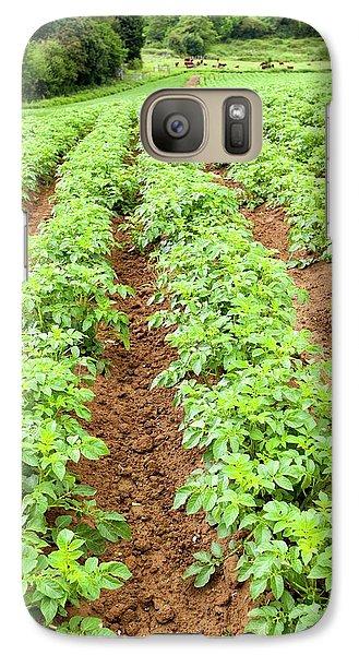 Potatoes Growing At Washingpool Farm Galaxy S7 Case by Ashley Cooper