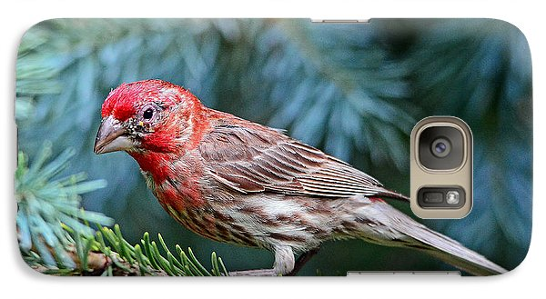 Galaxy Case featuring the photograph Purple Finch In A Spruce Tree by Rodney Campbell