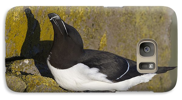 Razorbill Galaxy Case by John Shaw
