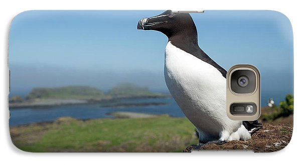 Razorbill On A Coastal Ledge Galaxy Case by Simon Booth