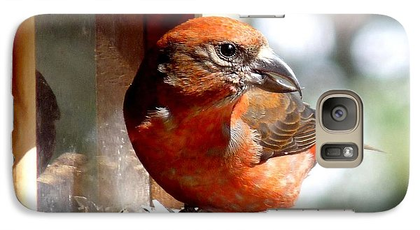 Red Crossbill Galaxy S7 Case by Marilyn Burton