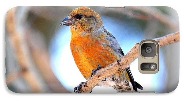 Red Crossbill On Aspen Galaxy S7 Case by Marilyn Burton