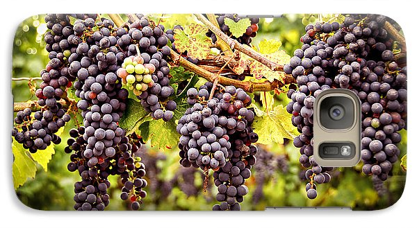 Red Grapes In Vineyard Galaxy S7 Case by Elena Elisseeva