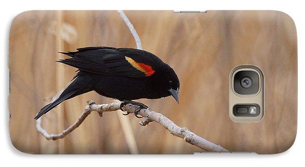 Red Winged Blackbird 1 Galaxy S7 Case by Ernie Echols