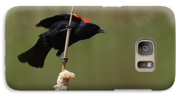 Red Winged Blackbird 3 Galaxy S7 Case by Ernie Echols