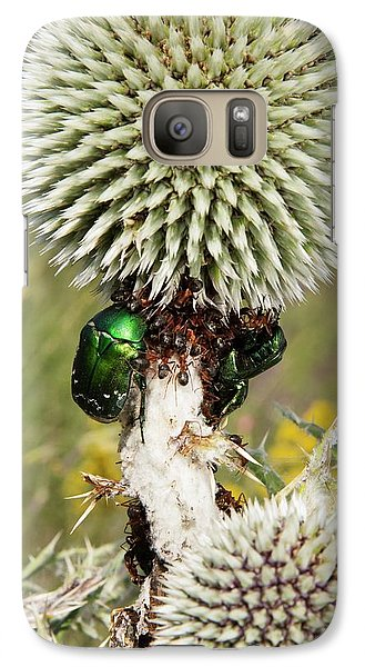 Rose Chafers And Ants On Thistle Flowers Galaxy Case by Bob Gibbons