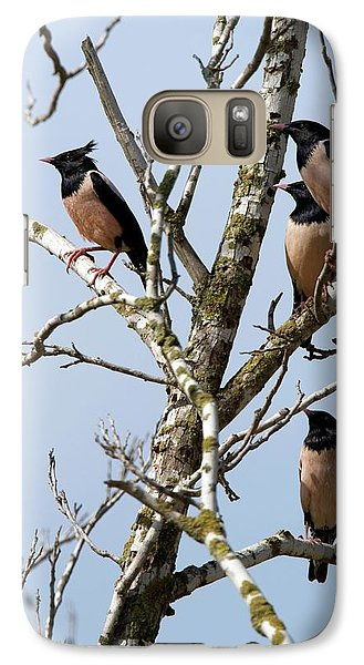 Rosy Starling (sturnus Roseus) Galaxy Case by Photostock-israel