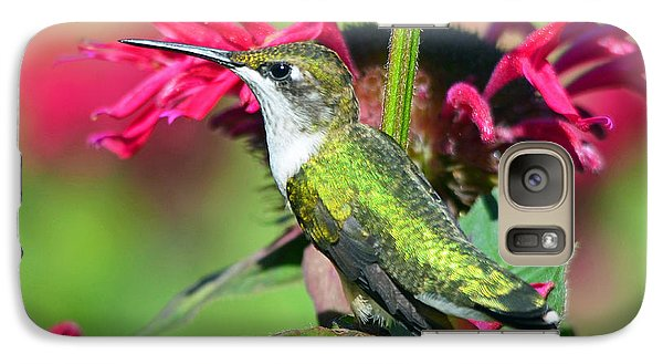 Galaxy Case featuring the photograph Ruby Throated Hummingbird Female by Rodney Campbell