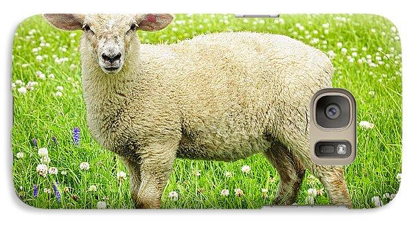 Sheep In Summer Meadow Galaxy Case by Elena Elisseeva