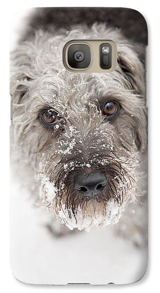 Snowy Faced Pup Galaxy S7 Case by Natalie Kinnear