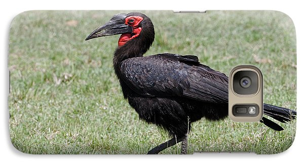 Southern Ground Hornbill, Maasai Mara Galaxy S7 Case by Adam Jones