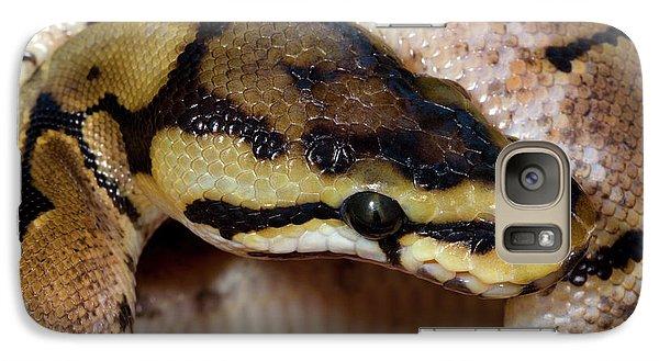 Spider Royal Python Galaxy S7 Case by Nigel Downer