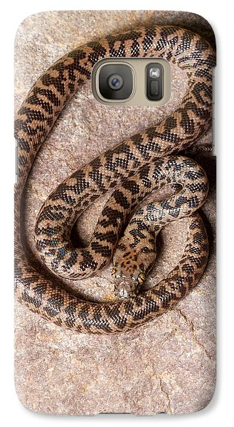 Galaxy Case featuring the photograph Spotted Python Antaresia Maculosa Top by David Kenny