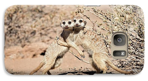 Suricates At Play Galaxy S7 Case by Tony Camacho