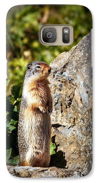 The Marmot Galaxy Case by Robert Bales