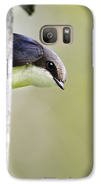 Tree Swallow Closeup Galaxy S7 Case by Christina Rollo