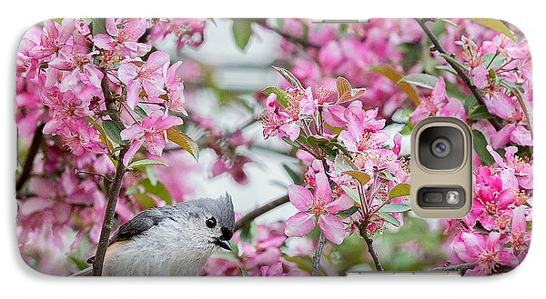 Tufted Titmouse In A Pear Tree Square Galaxy S7 Case by Bill Wakeley