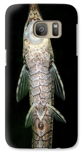 Twig Catfish Or Stick Catfish Galaxy Case by Nigel Downer