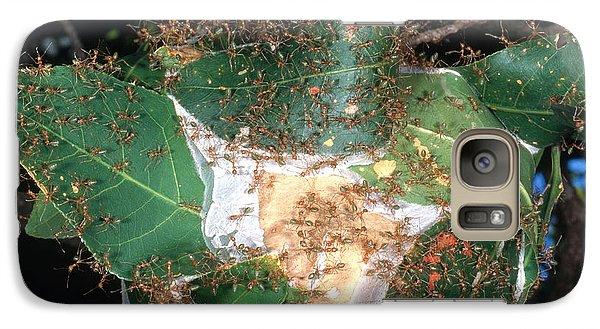 Weaver Ants Galaxy S7 Case by Gregory G. Dimijian, M.D.