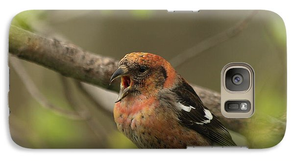 White-winged Crossbill Galaxy S7 Case by James Peterson