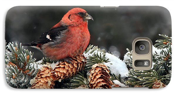 White-winged Crossbill Galaxy S7 Case by Nick  Saunders