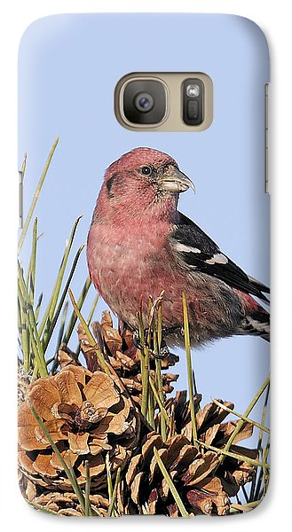 White-winged Crossbill On Pine Galaxy S7 Case by Allan Rube
