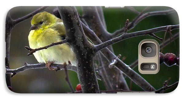 Yellow Finch Galaxy Case by Karen Wiles