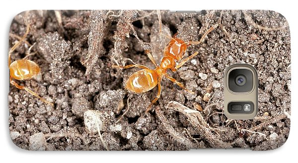 Yellow Meadow Ants Galaxy Case by Bob Gibbons