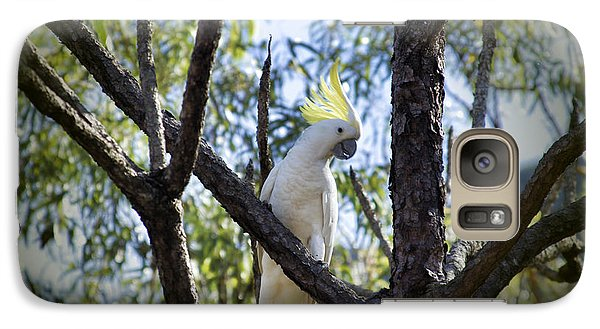 Sulphur Crested Cockatoo Galaxy Case by Douglas Barnard