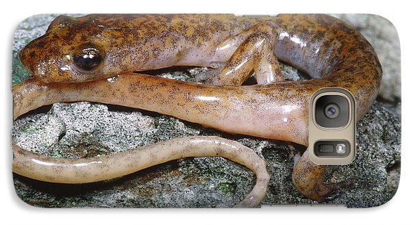 Cave Salamander Galaxy Case by Dante Fenolio
