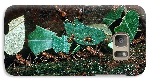 Leafcutter Ants Galaxy Case by Gregory G. Dimijian