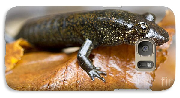 Mountain Dusky Salamander Galaxy S7 Case by Dustin K Ryan