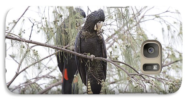Red Tailed Black Cockatoos Galaxy Case by Douglas Barnard