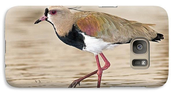 Southern Lapwing Galaxy Case by Tony Camacho