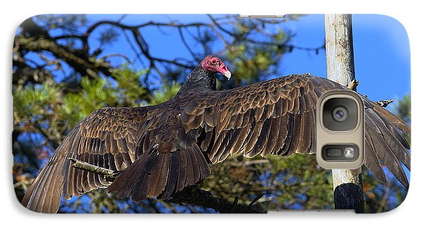 Turkey Vulture With Wings Spread Galaxy S7 Case by Sharon Talson