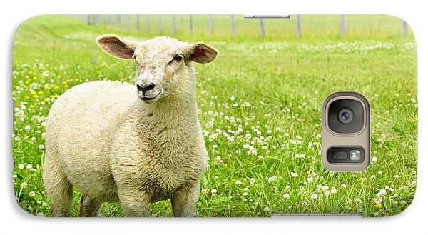 Cute Young Sheep Galaxy S7 Case by Elena Elisseeva