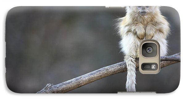 Golden Snub-nosed Monkey Rhinopithecus Galaxy S7 Case by Cyril Ruoso